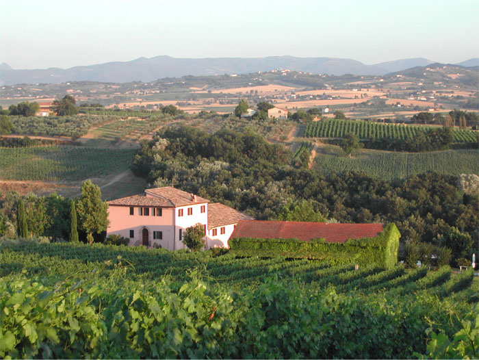 Antonelli Vineyards